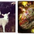 Lamb-lamb Collage