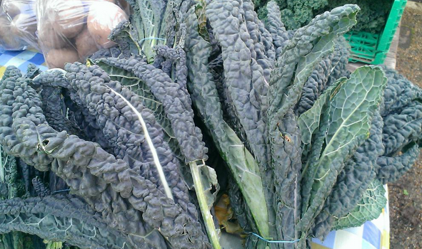 Cavolo nero for the first course sourced fresh from the market just the day before