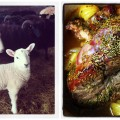 Lamb-lamb Collage