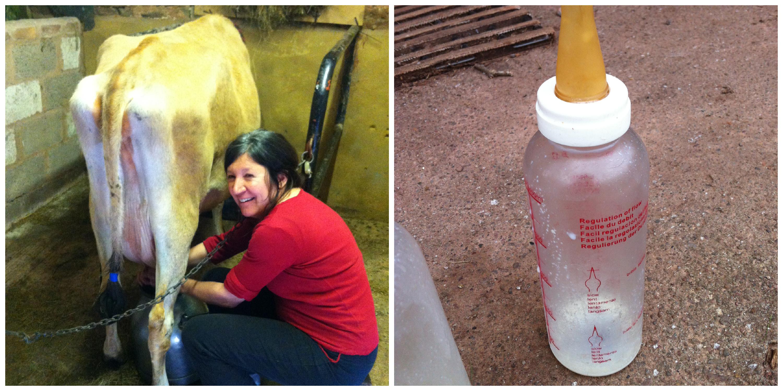 Milk-bottle Collage